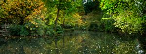 Burnham Beeches Autumn.jpg