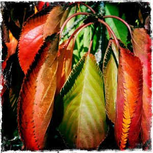 The Last Gasp of Colour